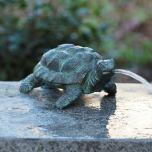 salg af Lille skildpadde