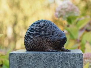 salg af Hedgehog