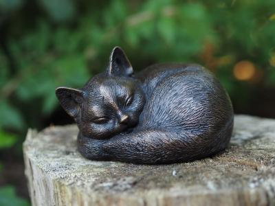 Kat som sover
