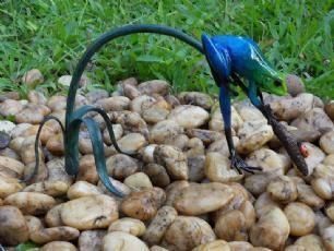 salg af Blå regnvejrsfrø på en gren/blomst