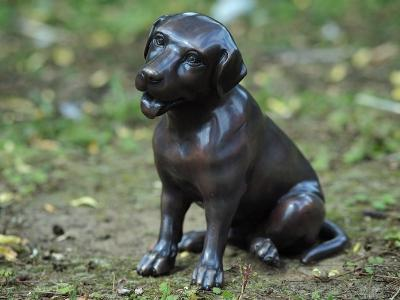 Lille labrador hund