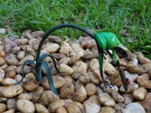 salg af Grøn regnvejrsfrø/skovfrø på en gren