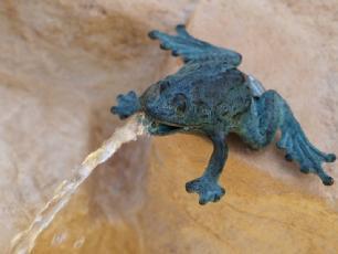 salg af Little spitting frog