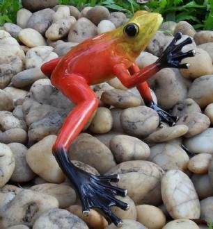 salg af Rød regnvejrs/skov frø