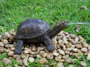 salg af Bronze Skildpadde